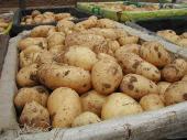 Картофель оптом 17р/кг