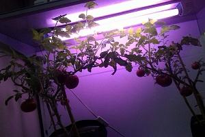 Светильник для растений и аквариумов