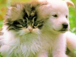 Купить : Ветеринария.Биокорректоры для здоровья всех животных