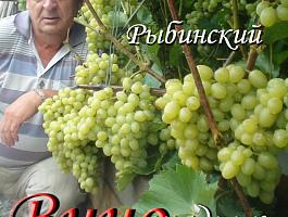 Саженцы морозостойкого элитного винограда