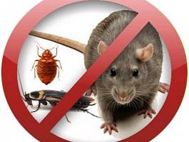 Дезинсекция, уничтожение насекомых, тараканов, клопов, муравьев, грызунов
