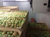 Холодильная камера для фруктов -5/5 Вналичии