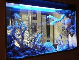 Чистка аквариумов Симферополь, Севастополь, Ялта, Евпатория